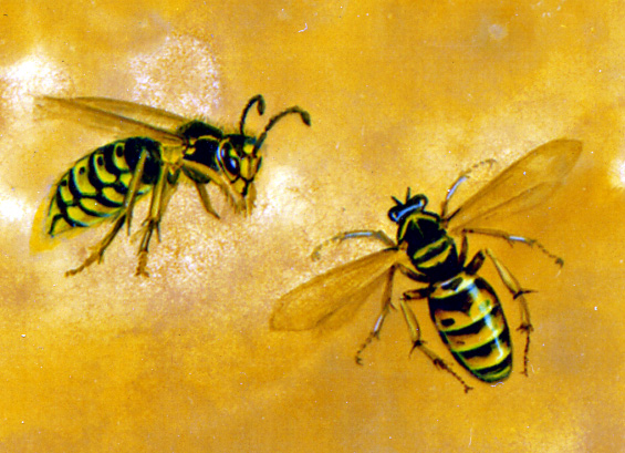 Insect Paintings